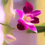 *Girl Pink's* Garden Flower